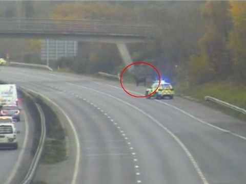 Traffic chaos after cow wanders on to motorway