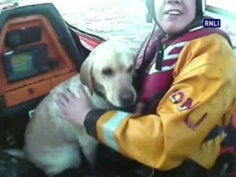 Dramatic lifeboat rescue of dog swept out to sea caught on camera