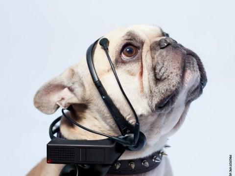 Just four months until we can understand dogs! Dog-to-English translator to become a reality