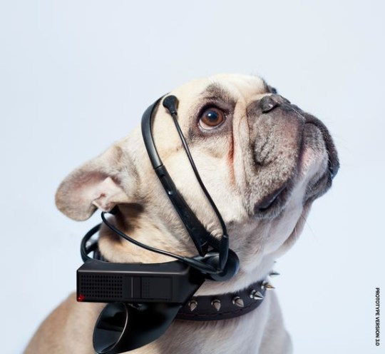 Dog translation could soon become a reality (Picture: No More Woof)