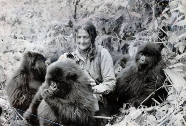 Dian Fossey, the American anthropologist and leading authority on rare mountain gorillas of Central America. Ms Fossey was murdered in her camp in Rwanda in December 1985. Her life story was made into a film Gorillas in the Mist starring Sigourney Weaver....