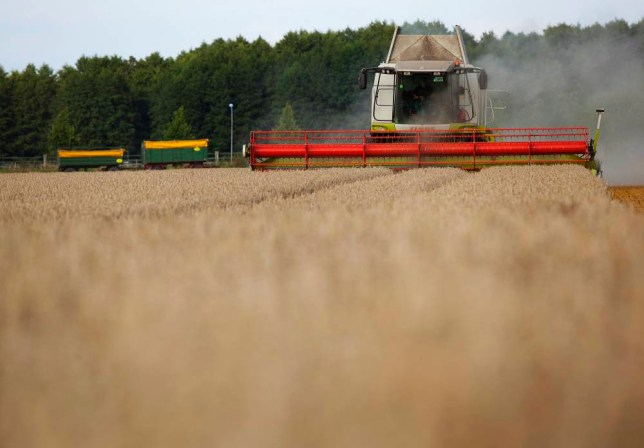 A Claas KGaA Lexion 560 combine harvester operates in a field of akteur winter wheat in Uetz, Germany, on Wednesday, Aug. 21, 2013. Germany's winter wheat production may be almost 12% more than a year earlier. Photographer: Krisztian Bocsi/Bloomberg via Getty Images