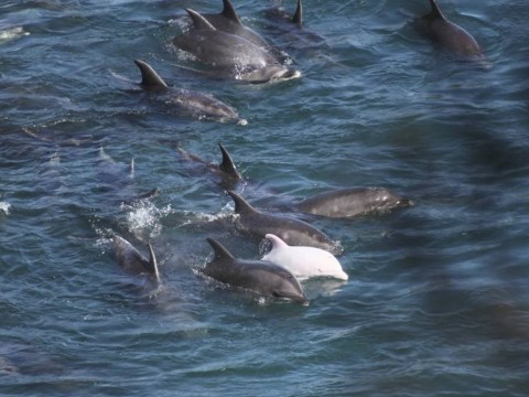 Hundreds of dolphins slaughtered in Japan's notorious Taiji Cove