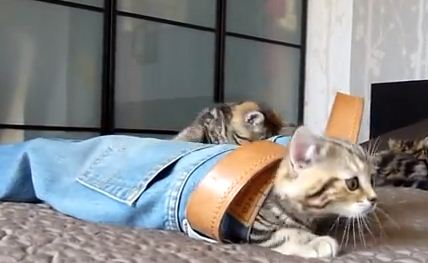 These insanely cute kittens are obsessed with a pair of jeans. That is all.