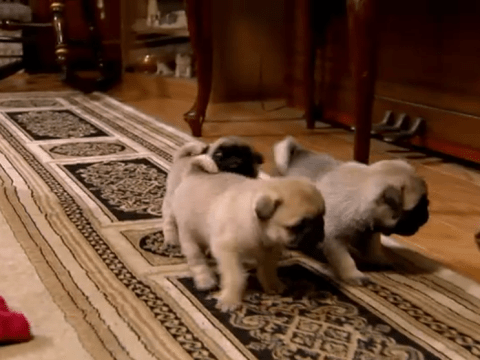 Four cute animal videos to help you beat Blue Monday
