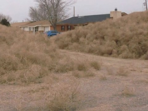 Residents of 'alien town' Roswell trapped in houses by tumbleweed invasion