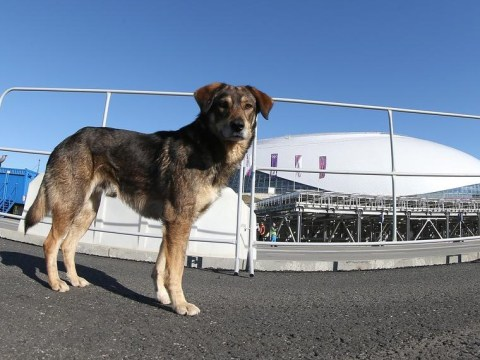If it barks, kill it: Kiddie-biting stray dogs in Sochi set for cull before Winter Olympics