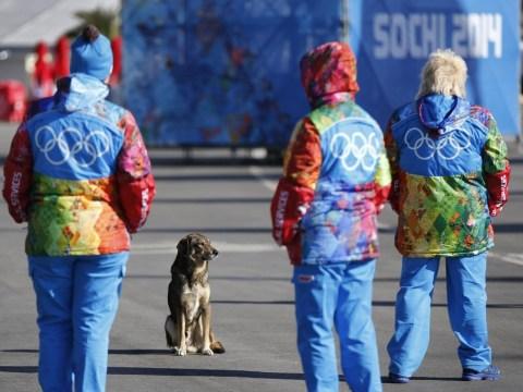 Sochi 2014 Winter Olympics: Lolo Jones wants a stray dog to keep her company