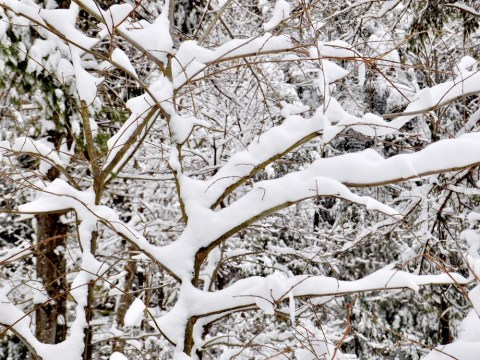 UK weather: Why a snow day is a gift from winter