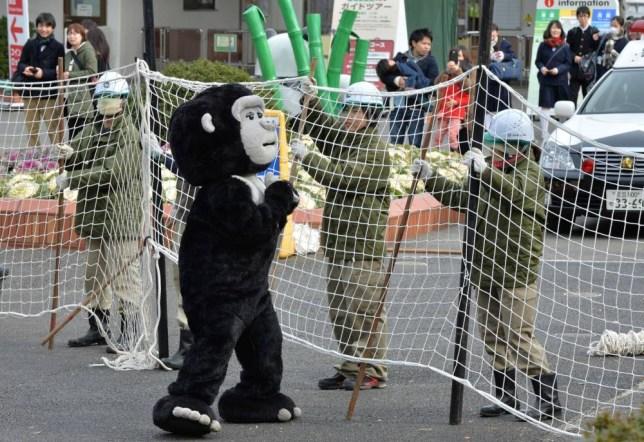 Zookeepers, gorilla costume