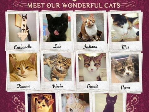 Meet the cats set to star at London's first cat café