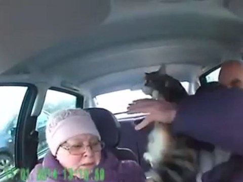 Breaking news: Cats suck at driving cars