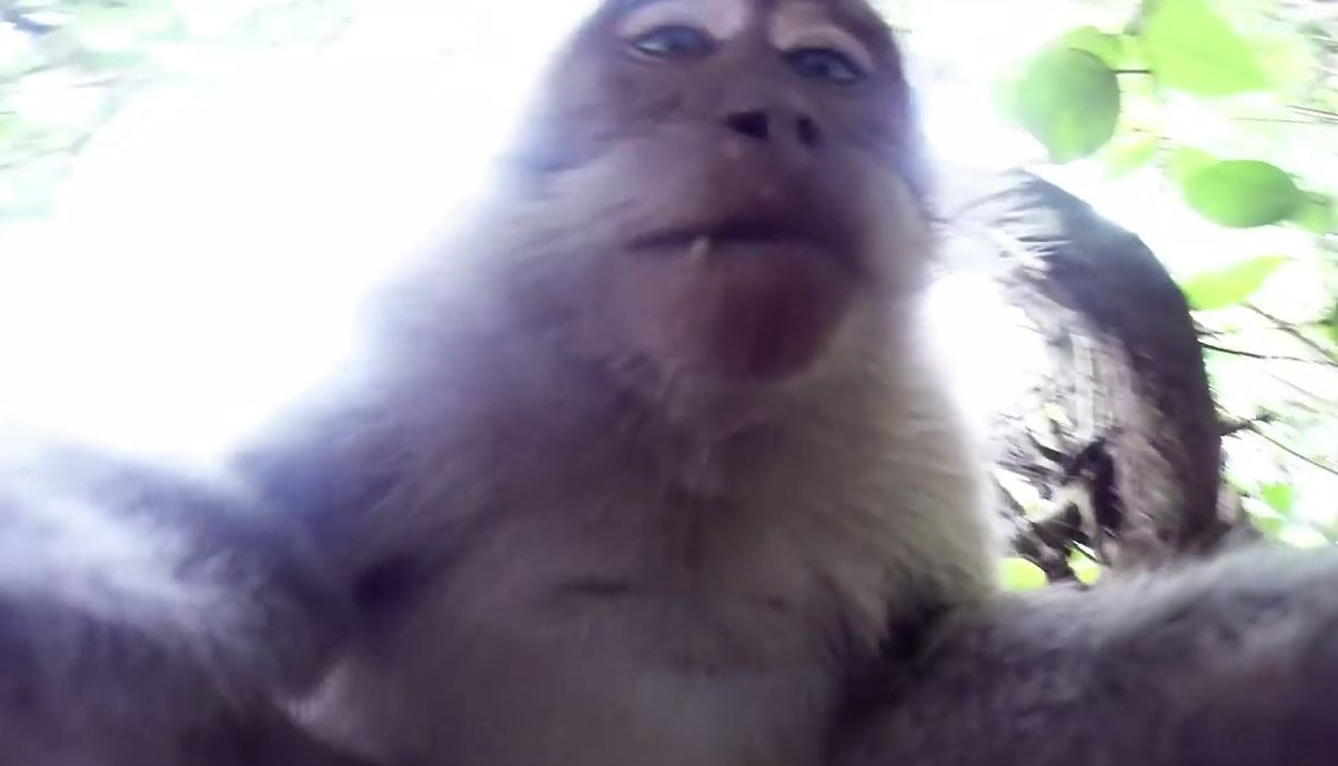 Bali: Cheeky monkey steals GoPro for selfie