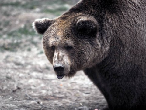 Pictures: Brown bears rescued to sanctuary after years of captivity in Kosovo
