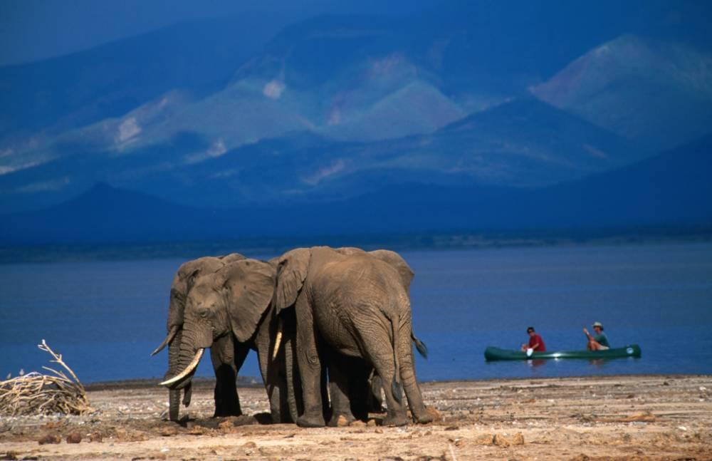 African safaris: Visit the Serengeti region, Victoria Falls and the Zambezi river