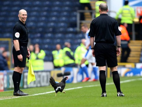 Chicken stops play in Blackburn v Burnley derby… again