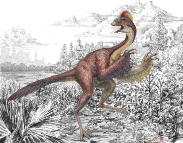 "EMBARGOED TO 2100 WEDSNESDAY MARCH 19 Undated handout artist impression issued by the Carnegie Museum of Natural History of Anzu wyliei, a bird-like dinosaur nicknamed the ""chicken from hell"", that roamed the Dakotas 66 million years ago. PRESS ASSOCIATION Photo. Issue date: Wednesday March 19, 2014. The long-legged, 10ft (3 metre) tall bird-like dinosaur lived alongside Tyrannosaurus rex 66 million years ago. Anzu wyliei - the first part of its name is derived from a bird-like demon in Mesopotamian mythology - weighed 500 pounds (227kg), measured 11.5ft (3.5 metres) from head to tail, and sported a cockscomb crest on top of its head. See PA story SCIENCE Chicken. Photo credit should read: Mark Klingler/Carnegie Museum of Natural History/PA Wire NOTE TO EDITORS: This handout photo may only be used in for editorial reporting purposes for the contemporaneous illustration of events, things or the people in the image or facts mentioned in the caption. Reuse of the picture may require further permission from the copyright holder."