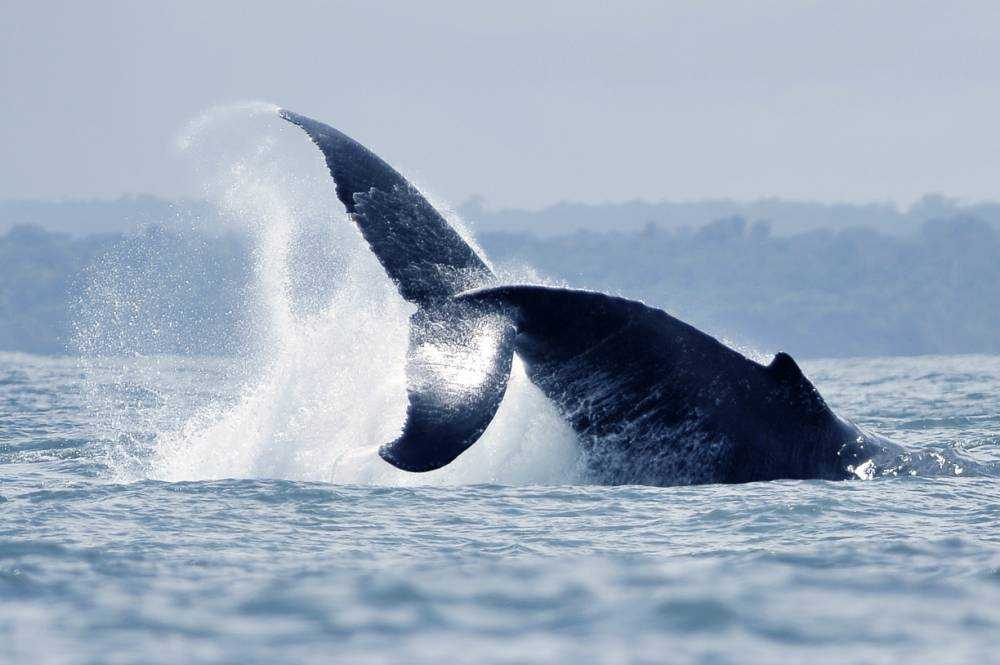 Japan ordered to end whaling as UN destroys 'science' claim