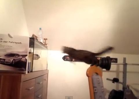 Video: Cat desperate for fish doesn't see plastic walls of tank