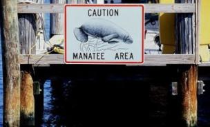 Sean Kingston's jet-ski accident could have earned him a $30,000 fine for disturbing manatees.