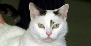 A cat (unmarried)