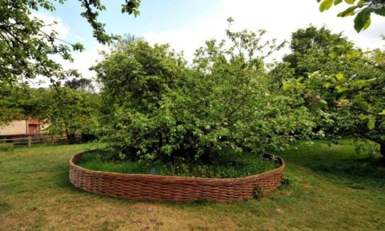 Sir Isaac Newton, theory of gravity, apple tree