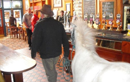 Pony and Joe in Elihu Yale pub Wrexham