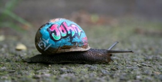 Graffiti snails London