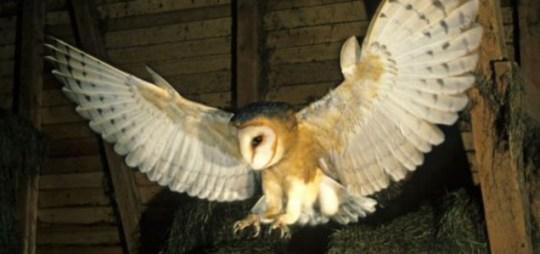 Large owl, Albuquerque's foothills.