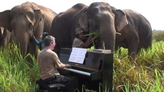Paul Barton elephants