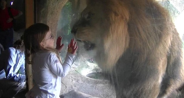 Girl faces down angry lion