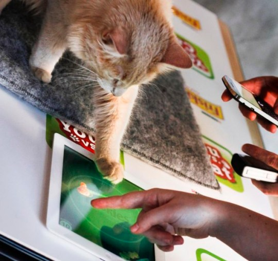 You vs Cat iPad app