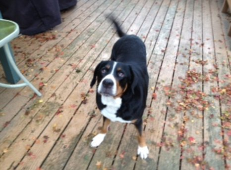 Sierra was fed hydrogen peroxide by her owner to make her vomit