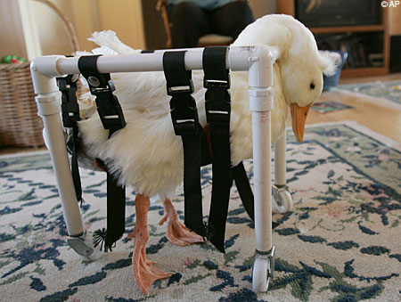 duckwheels