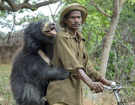 orphan bear