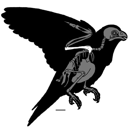 Parrot fossil