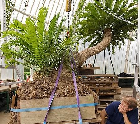 giant plant