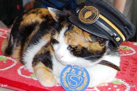 Tama the station master cat