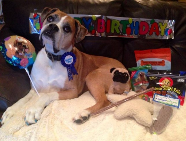 Dog owner creates adorable bucket-list for terminally-ill boxer