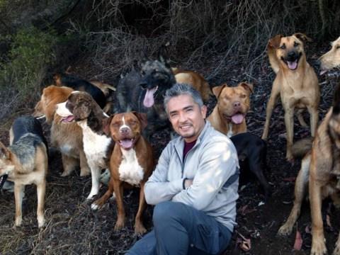 Dog whisperer Cesar Millan: Hollywood is full of predators