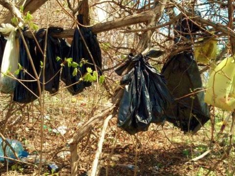 Horror as 30 dead cats found hanging in tree
