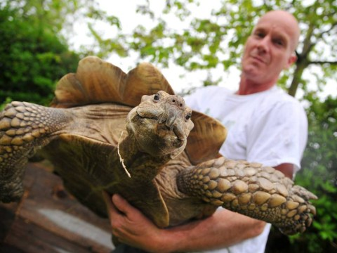 Meet the tortoise who has grown so big he had to move house