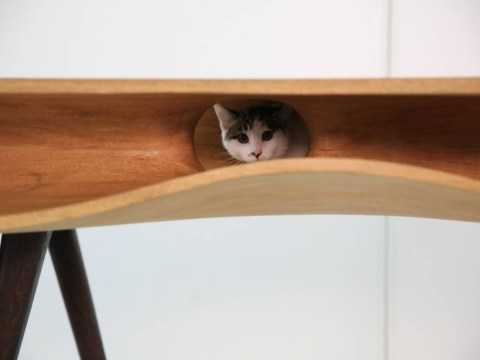 Chinese architects design dining table for cats and humans, and we want it