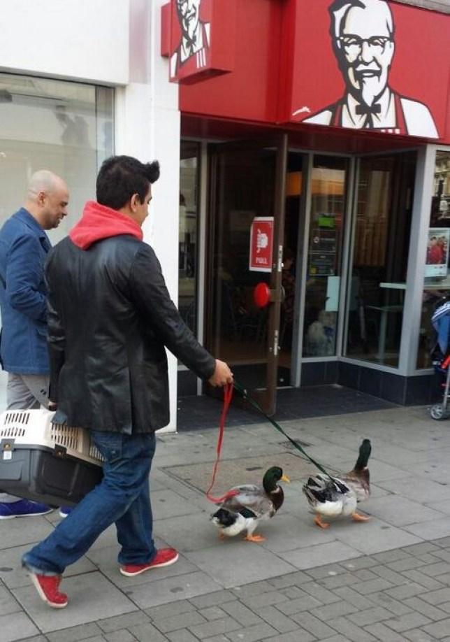 Ducks, Peckham