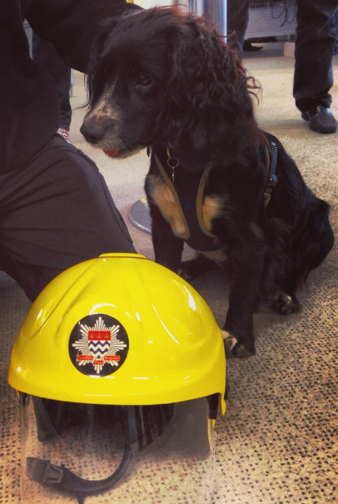 The London Fire Brigade has a dog called Sherlock who helps investigate fires (this is not an April Fool)