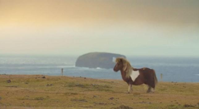Socks the moonwalking Shetland (Picture: YouTube/Three)