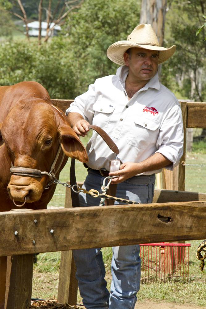 Travel news: Get the inside track of modern beef farming at Australia's The Bull Shop