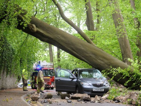 A giant tree fell on our car… and we didn't notice: Family-of-four's lucky escape