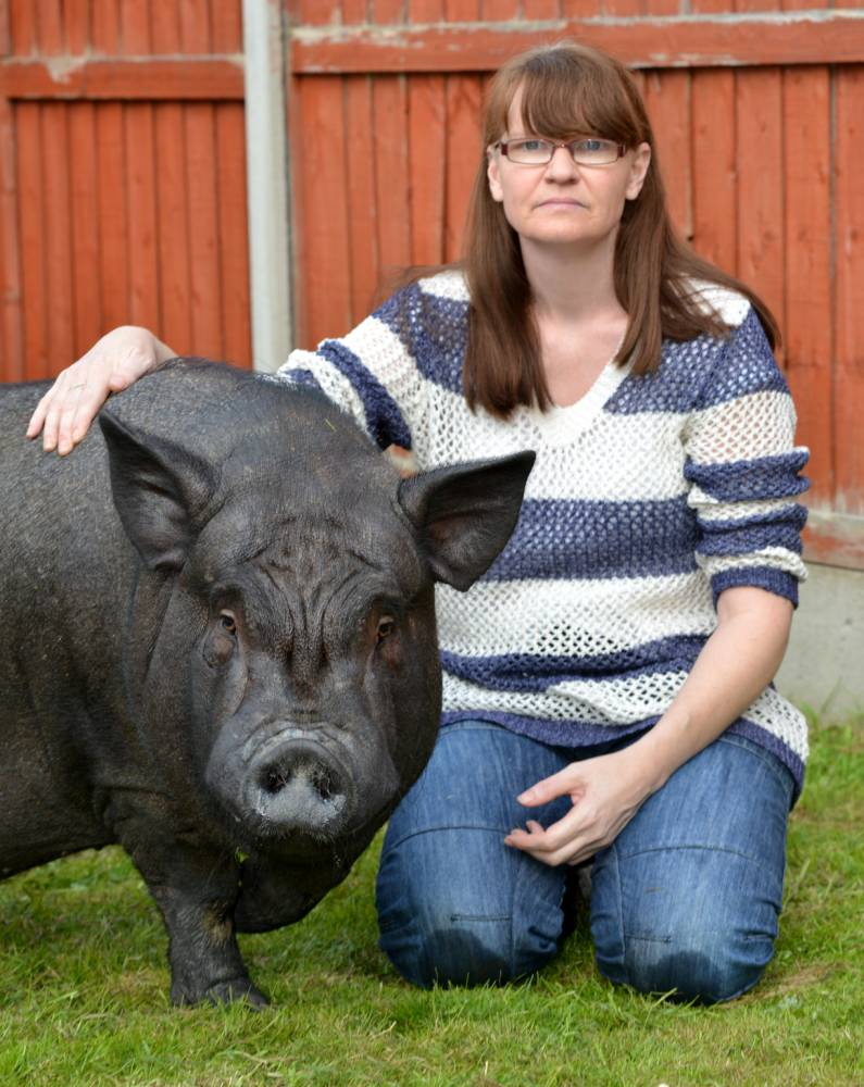 PIC FROM CATERS NEWS - (PICUTURED: Taz the Pig and Donna Davidson) - A woman claims shes being forced out of her council house - after her tiny micro pig grew to a whopping 21 STONE beast. Donna Davidson, 46, from Leicester, bought tiny 7lb Taz thinking he would grow no bigger than a teacup. But the pig kept on growing - and now tips the scales at more than 300lb and barely fits in her small garden. Now, Leicester City Council has issued an ultimatum: the pig or the house.