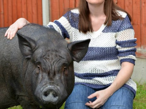 Woman faces eviction from council house because her micro-pig is too big